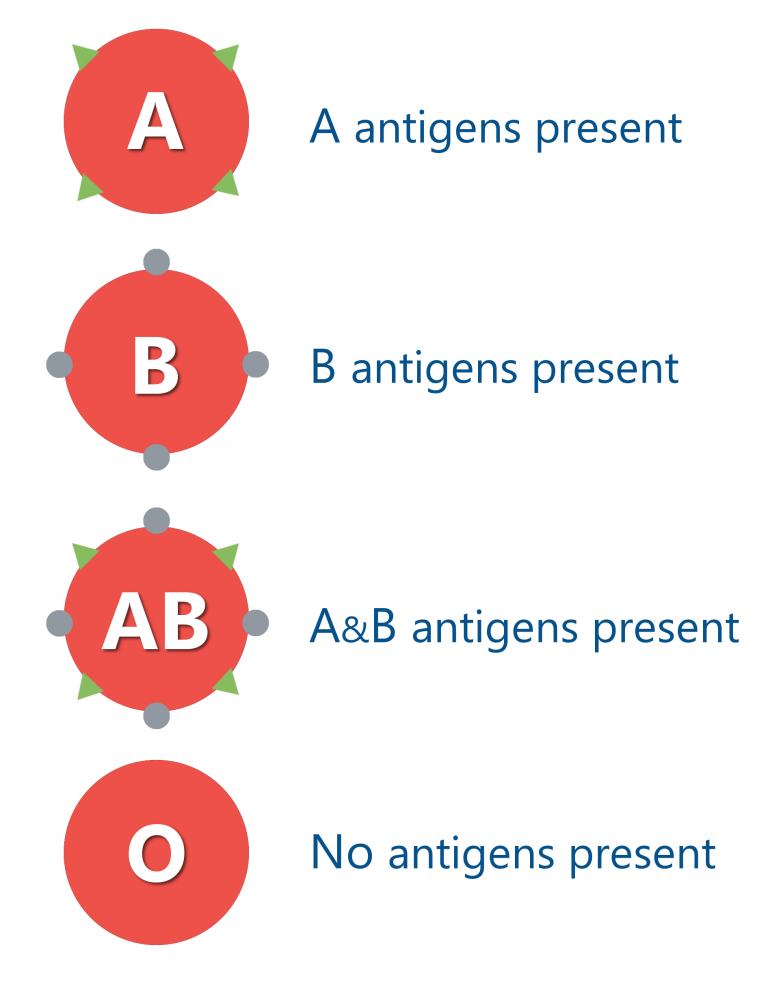 ABO antigens graphic